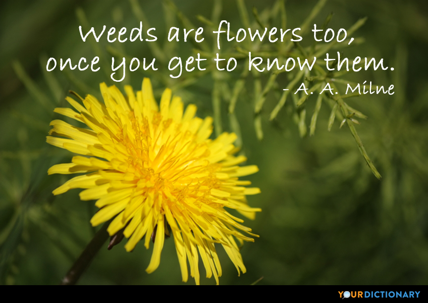 Weeds Are Flowers Too Once You Get To Know Them A A Milne Quote