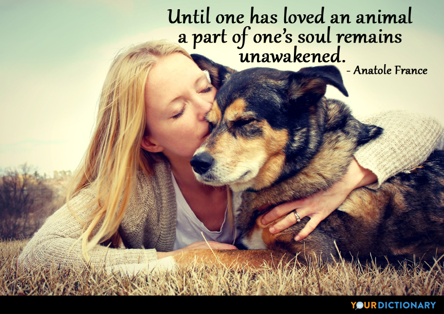 Until One Has Loved An Animal A Part Of One's Soul R Anatole Magnificent Love Animal Quotes