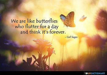 Butterflies Quotes Quotes About Butterflies Yourdictionary