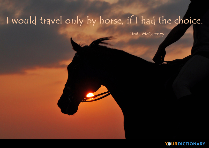 Horse Quotes - Quotes about Horse | YourDictionary