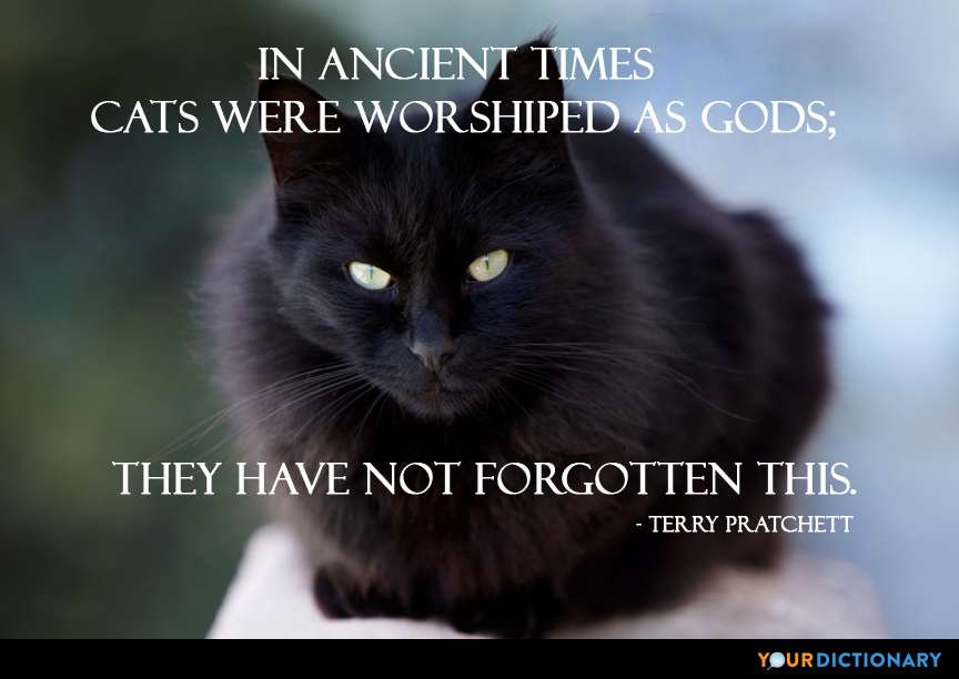 Cat Quotes Unique Cats Quotes
