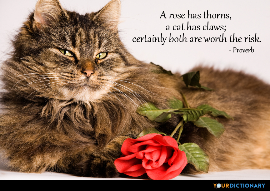 Quotes About Cats Fair A Rose Has Thorns A Cat Has Claws Certainly Both Are Wort