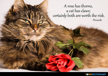 Quotes About Cats | Cats Quotes